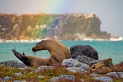 sea-lion-rainbow-Latin-Trails-Galapagos