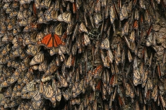 Mountains-of-Monarchs-Eric-Rock-1