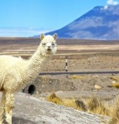 """The """"Perfect Ten"""" South American Destinations"""