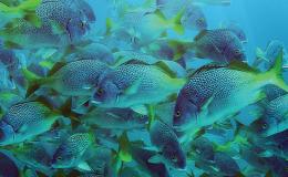 08-snorkeling-costa-rica-8acd