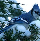 Winter in NW Washington – Outdoor Adventures Continue