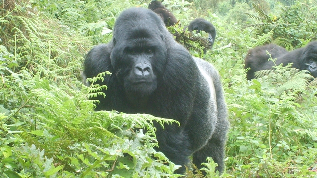 TRAVEL PULSE | Great Safaris Blazes Trails in Uganda