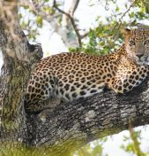 CHICAGO TRIBUNE | Venture out of Africa on a safari in Sri Lanka