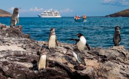 Sea-Star-Penguins-Latin-Trails-Galapagos