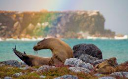 sea-lion-rainbow-Latin-Trails-Galapagos
