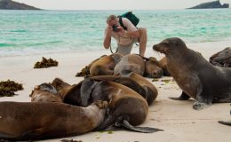 sea-lions-Latin-Trails-Galapagos