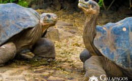 Latin Trails | Galapagos Tours