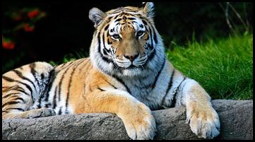 Worldwide Wildlife Expeditions