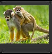 "Abundant Wildlife During Costa Rica ""Veranito"" – Little Summer Season"