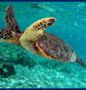 Galapagos Specialists – Island Hopping Tours