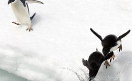 2-Antarctic-Peninsula-Ellie-Van-Os-02