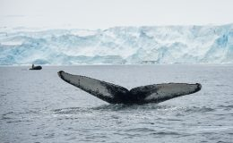6-Antarctic-Peninsula-Jeff-Vanuga-05