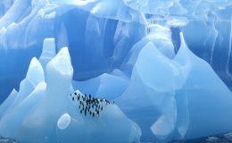 8-Antarctic-Peninsula-Mark-Thomas-01