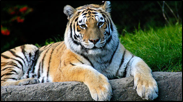 Encounters with Exotic Wildlife – Wild Planet Adventures Delivers